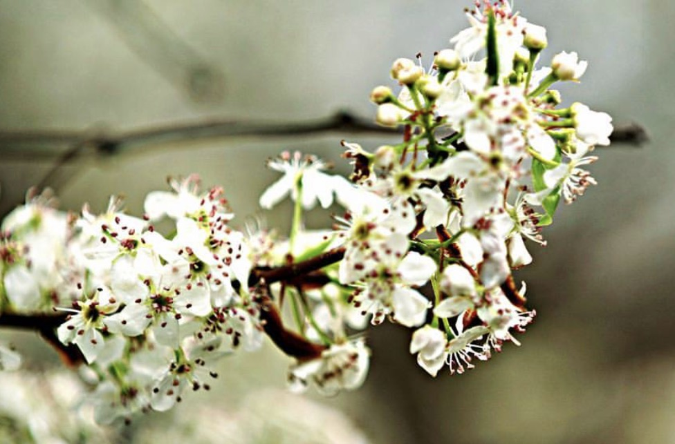 White_Flowers_Sony