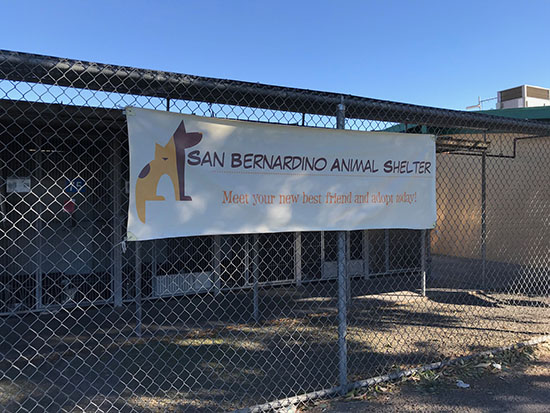 San Bernardino Animal Shelter