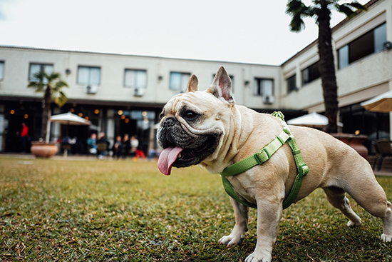 Adorable or Deplorable? Pet Friendly Hospitality