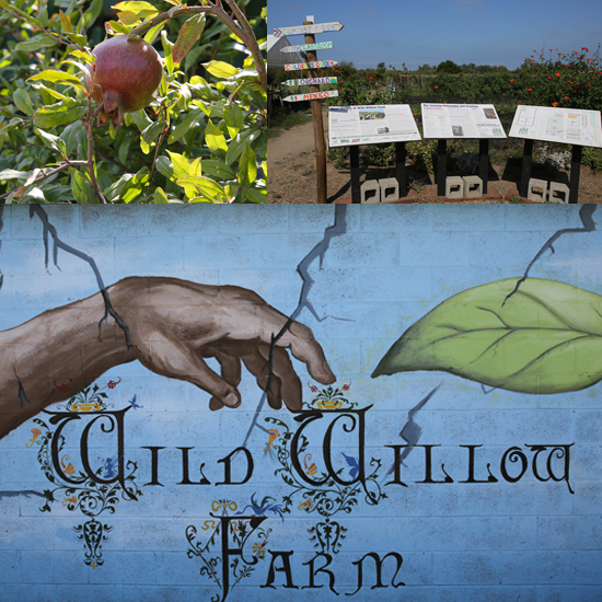 Willow Farm