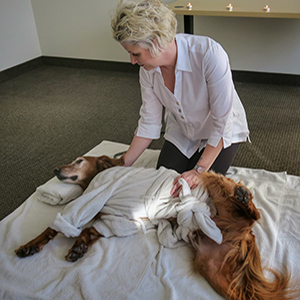 Local veterinary technicians learn the benefits of canine massage from Argosy University, Twin Cities